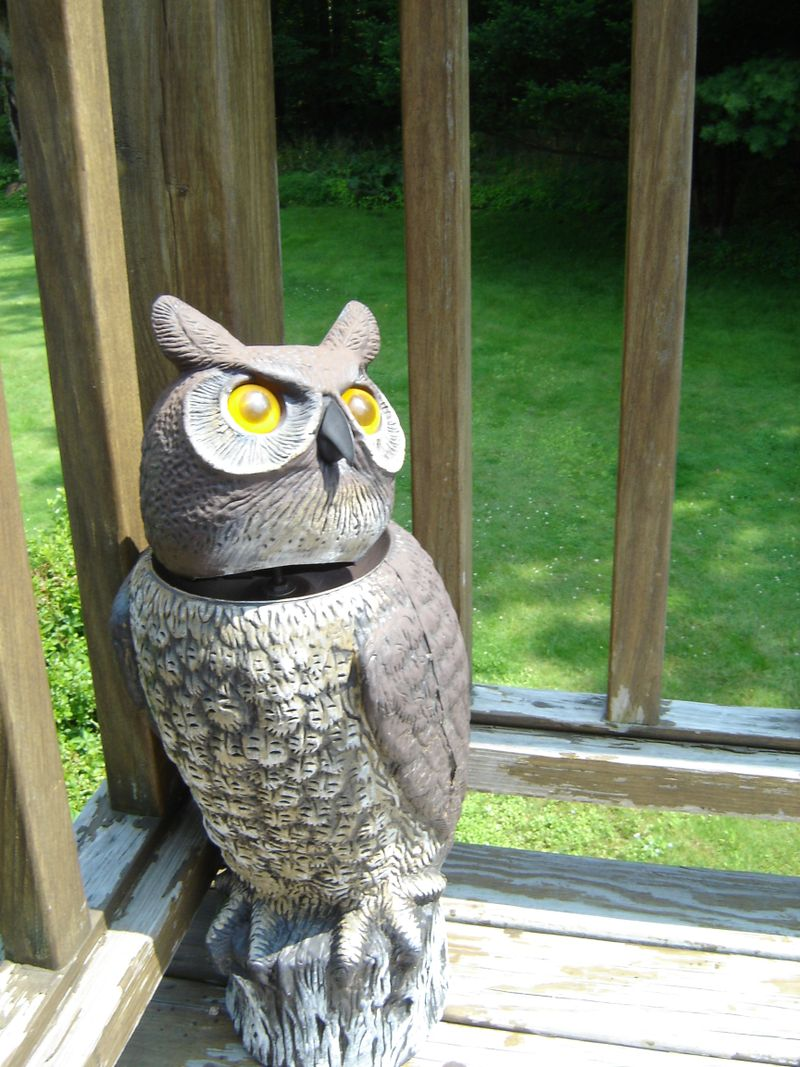 Owl on deck
