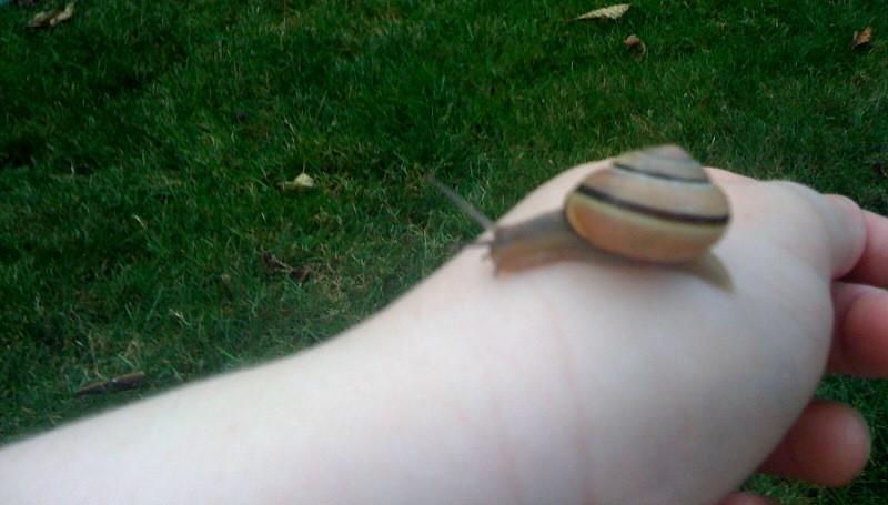 Snailonhand